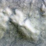"""""""Diablos de polvo"""" recorren la superficie de Marte"""
