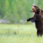 'Rewilding', el experimento para que la naturaleza recupere su estado salvaje