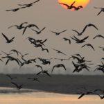 Día Mundial de las Aves Migratorias, segundo sábado de mayo y de octubre
