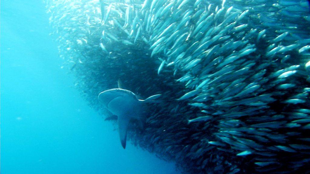 El 17 % de la biomasa de especies marinas podría perderse por el cambio climático