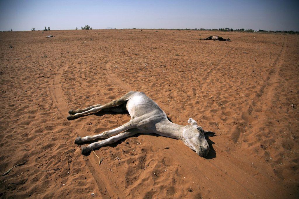 Paisaje ambiental en Darfur del Norte- Albert Gonzalez Farran, UNAMID. La Operación Híbrida de la Unión Africana y las Naciones Unidas en Darfur (MINUAD o UNAMID por sus siglas en inglés) es una misión llevada a cabo en Sudán por petición de las Naciones Unidas mediante la Resolución 1769 del Consejo de Seguridad de las Naciones Unidas, aprobada el 31 de julio de 2007.