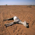 Por la desertificación, en 2025 podrá haber 1,800 millones de personas que vivan en una escasez absoluta de agua