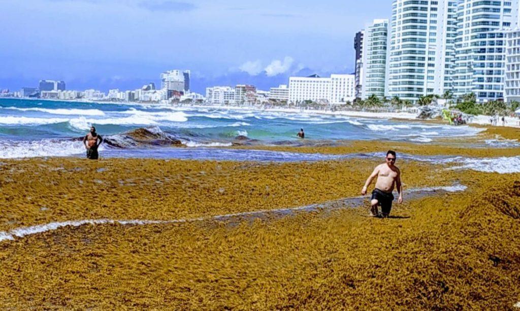 Acumulación de sargazo en la playa
