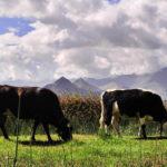 Hay que reducir el consumo de carne, para frenar el cambio climático, dice la ONU