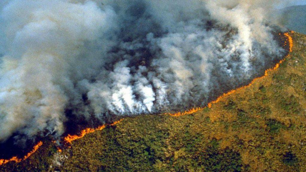 """Los """"Pulmones del mundo"""" arden: La Amazonia se está quemando"""