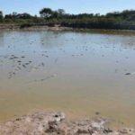 La suma de algas y bacterias aumenta la producción de hidrógeno, un combustible del futuro
