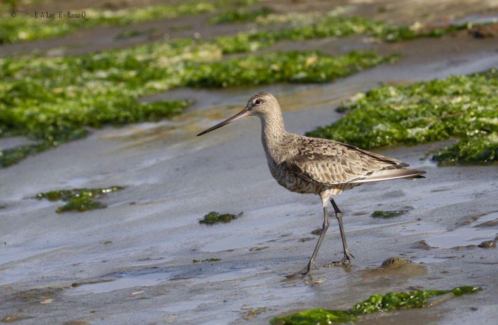 ¿Cómo pueden las aves migratorias volar 10,000 kms sin desviarse?